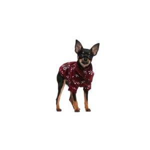 miniature-pinscher